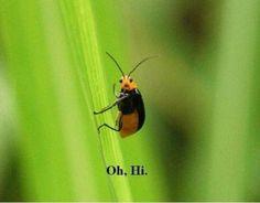 Oh, hi