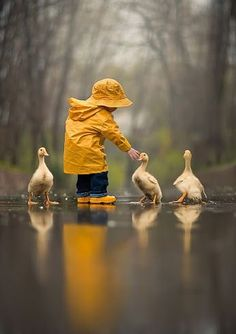 Little boy with ducklings. Beautiful photo.