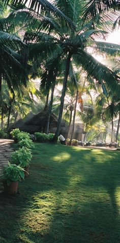 KERALA RETREAT - Greetings from Kerala :O)… click on the image to read all about Day 1 and what we received as part of the beginning to 10 days of massages/body treatments that we all receive as part of the package of being at the Resort.