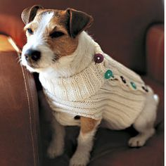 Small dog wearing button-up dog sweater free knitting pattern for a dog jumper allaboutyou.com