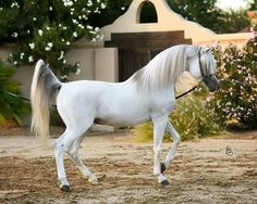 So much beauty and pizzazz in this horse