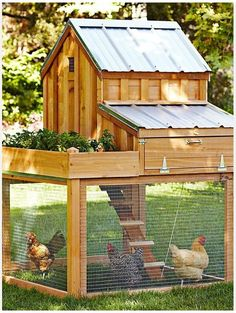 "well-designed hen house (just add a movable ""chicken tractor"" for more forage space) will add organic protein to your diet."