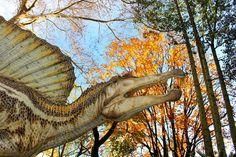 Dinosauri in carne e ossa - Approfondimento -  http://www.rollingems.com/index.php/press/193-catalogo-italiano-degli-effetti-deformativi-del-suolo-indotti-dai-forti-terremoti-cedit-2