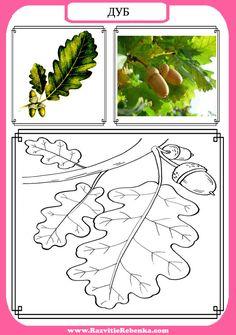 Деревья. Веточки деревьев. Листья.  Знакомим детей с названиями деревьев. Запоминаем как выглядят веточки и листочки таких деревьев как:  Ря...