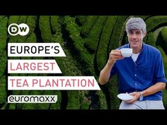 Europe's Oldest Tea Plantation On The Azores, Portugal   Europe To The Maxx - YouTube The Maxx, Azores, Archipelago, Portugal, Europe, Portuguese, Tea Time, Youtube, Casual