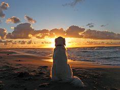 Dog and sunset