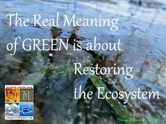 The Real Meaning of GREEN is about Restoring the Ecosystem #green #sustainability #rmogreen