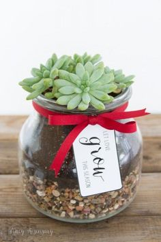 Holiday Gift Idea: Friend and Neighbor gifts with free printable tags! A small succulent is the perfect gift for the Christmas season! #theperfectgift