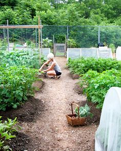 Vegetable garden design - 20 simple gardening tips - The Art of Doing Stuff