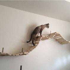 Promenade pont de singe pour chat