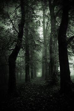 Tree Path by mr-kreciu.deviantart.com on @deviantART
