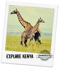 All about the flag of Kenya complete with information and