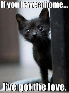 Rescuer Drove Miles to Save Kitten on Christmas Eve, A Day After the Rescue...