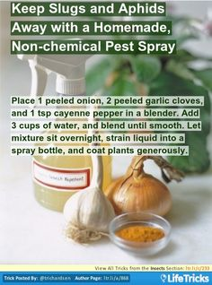 Insects - Keep Slugs and Aphids Away with a Homemade, Non-chemical Pest Spray