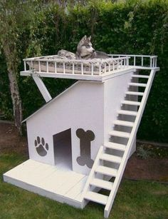 STRANGE DOUBLE DECKER DOG HOUSE WITH ROOF DECK!