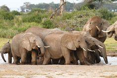 'Elephants on the waterhole' von martin buschmann bei artflakes.com als Poster oder Kunstdruck $20.79