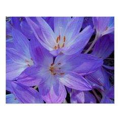 Autumn Crocus Floral Poster - photography gifts diy custom unique special