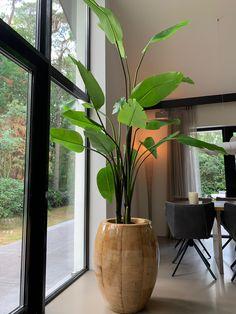 Living Room Plants, House Plants Decor, Interior Plants, Home Interior Design, Large Indoor Plants, Indoor Plant Decor, Diy Home Decor, Room Decor, Decoration Plante