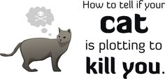 How To Tell If Your Cat Is Plotting To Kill You http://cheezburger.com/2067973/how-to-tell-if-your-cat-is-plotting-to-kill-you?utm_campaign=crowdfire&utm_content=crowdfire&utm_medium=social&utm_source=pinterest