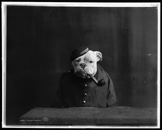 Chimpanzees in clothes? Evil. Dogs in clothes? Funny. Dogs in clothes with pipes? HYSTERICAL. Well played, 1905.