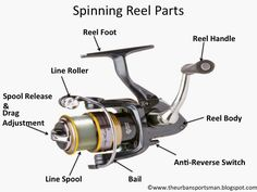 The Urban Sportsman: Understanding the Different Types of Fishing Reels
