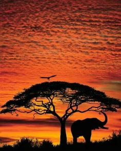 I want this as a tattoo...acacia tree for my daughter and elephant for my son.