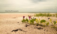I made this photo in Flagler Beach, Florida, US. The mauve flowers on the sand, the leaves and the ocean as background bring me a sense of calmness and relaxation.