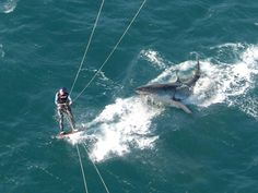 Real or fake?  A Cape Town Kite Surfer claims he captured this close encounter with a great white.