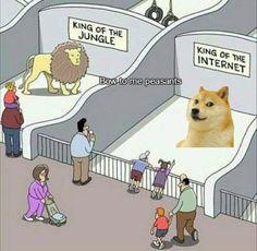 Heil doge http://ibeebz.com