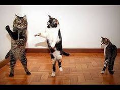 Funny Cat Videos 2016 Try Not To Laugh r GrinFunny Cat Videos 2016 Try Not To Laugh r Grin funny cat videos 2016 try not to laugh or grin videos. Cats are cute but more importantly they are curious. I believe it is due to the curiosity and strong mind of felines that they provide endless funny material. Let us analyze for a moment funny cat videos 2016 try not to laugh or grin videos on YouTube. cat cat funny cat videos cats and dogs funny cat video funny cat videos funny cats funny cat…