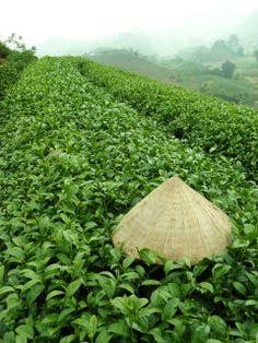 Moc Chau - Vietnam