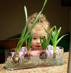 Learning about Spring Bulbs