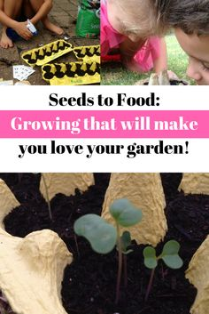 Growing veg from seed is such a rewarding experience, not only for the health benefits, but for the hands on learning it provides the kids. Seed Raising, Family Garden, Growing Seeds, Love Garden, Hands On Learning, School Readiness, Grow Your Own Food, Seed Starting, Amazing Gardens