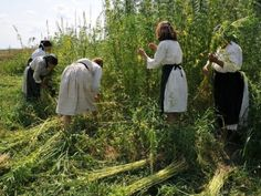 """5 Forgotten Properties of Hemp Fabric that Make It a Top Quality Textile - Nowadays, people are waking up to the injustice that has been done in the past century. Hemp activists scream out the benefits of the """"world's most extraordinary plant"""". You would be surprised to know that over 25000 products, including hemp fabric, fuel, dynamite, insecticide, plastic, paper can be made from hemp."""