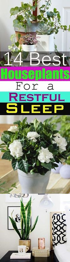 Plants grown indoors bring nature into the home but do you know there are plants that can help you sleep better? 14 Best Houseplants for a Restful Sleep. Take a look!