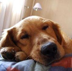 Como evitar que meu cachorro suba nos móveis