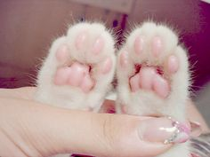 little paws...a kitty but still super cute (and nice nail polish...it looks like incoco)