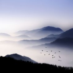 like a Chinese landscape brush painting almost...as we saw from the yellow mountains.  It is called the cloud sea