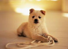 A Dog with rope cute