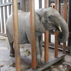 Please help stop the export of animals to China.Please sign & share,thanks.