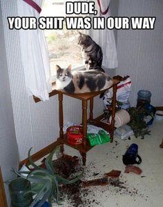#Cats #Cat