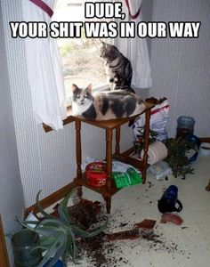 I hate the swear word, but this is funny.  Pretty much how cats think. ;).  I recall someone's cat walking over picture to get where she wanted to go