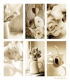 #neutral #flowers #vintage #french Photography Anne Costello
