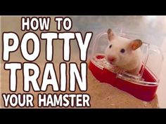 DIY toys for your hamsters - YouTube