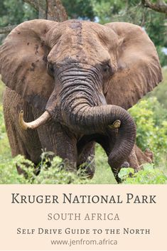 A 5 day self-drive guide route to the northern Kruger National Park. Escaping the heat of the day travelling from swimming pool to swimming pool. Kruger National Park, National Parks, All About Africa, Get Off The Grid, Self Driving, Travel Articles, Summer Heat, South Pacific, Where To Go