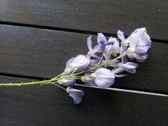 La flor de la glicinia