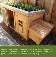 Rather than a chicken coop, and rather than herbs, I think I'd plant a good strong ground-cover plant atop the dog house, as a place to rest.