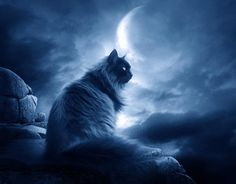 is it too dark?:The Black Cat II:. Crazy Cat Lady, Crazy Cats, Tres Belle Photo, Pub Vintage, Black Magic Spells, Cat Jokes, Witch Cat, Montage Photo, Beautiful Moon