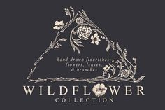 Wildflower Collection - Illustrations - 1