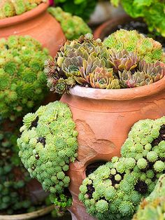 A Guide to Growing, Watering, Trimming and Planting Succulents